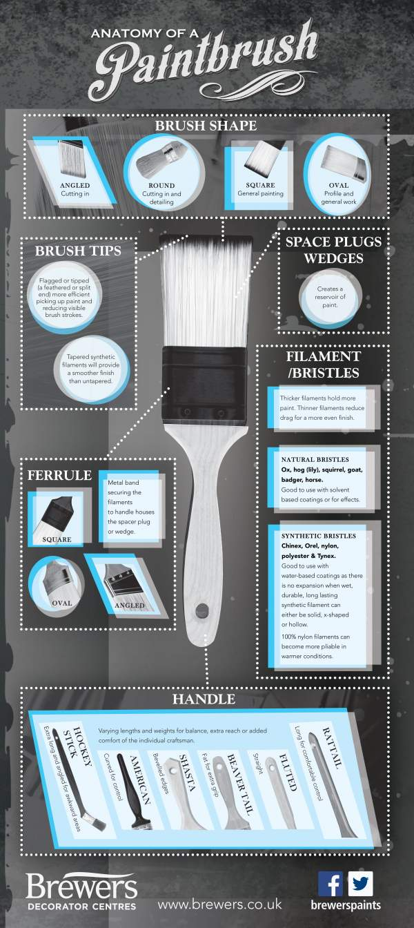 Anatomy of a paintbrush - infographic